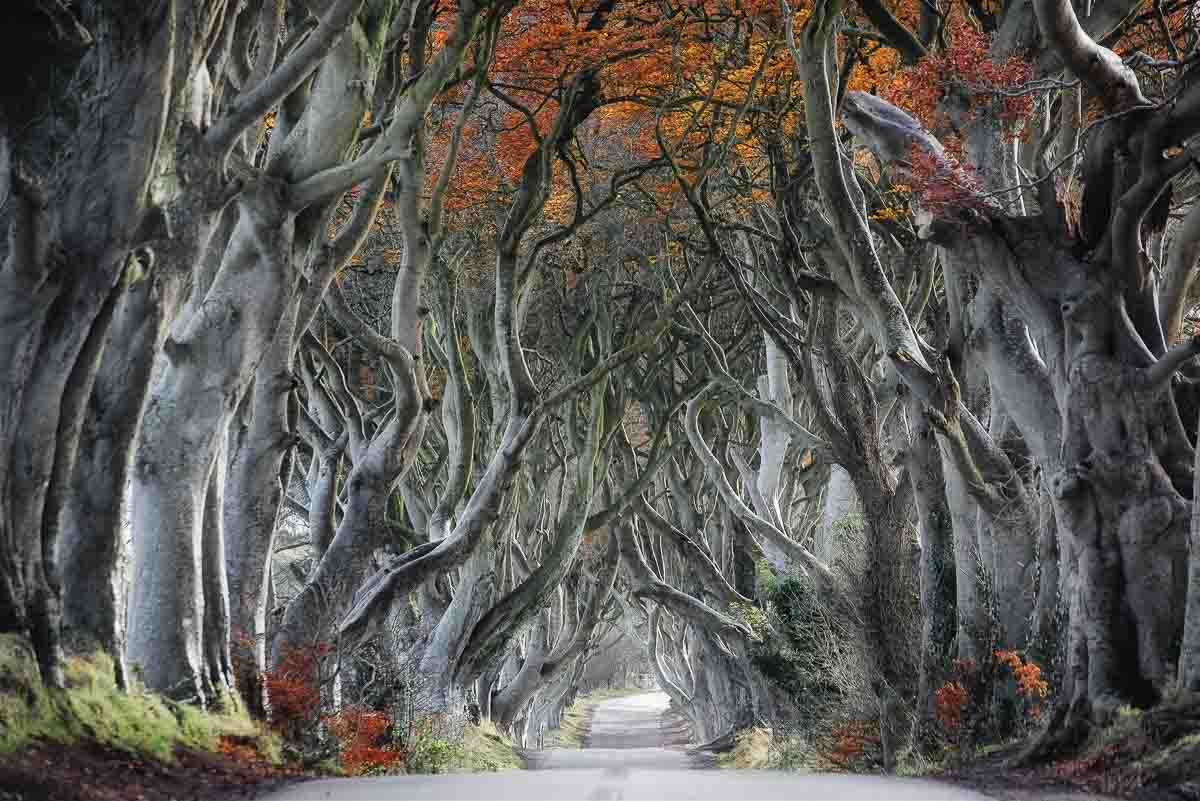 The dark hedges, Armoy (Game of Thrones)